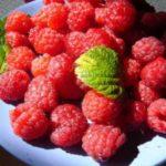 Чем манит ягода-малина?
